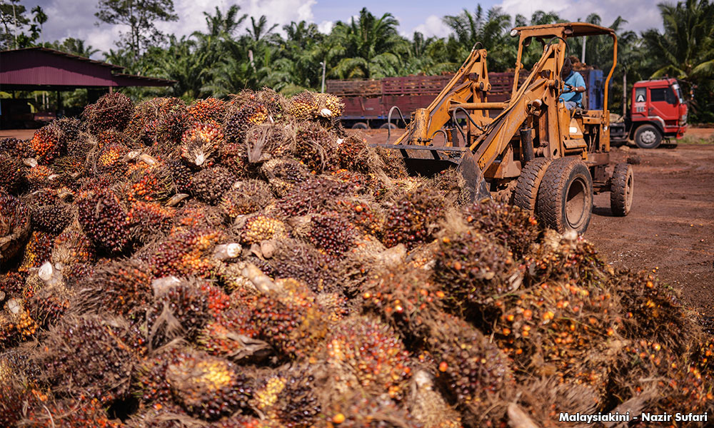 MPOA proposes 3 budget wish list items to safeguard oil palm industry