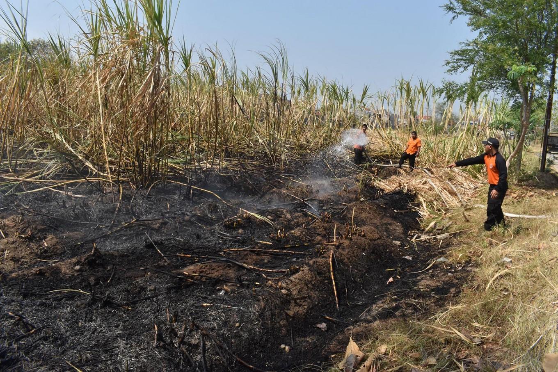 Man burns to death in sugarcane field in Blitar