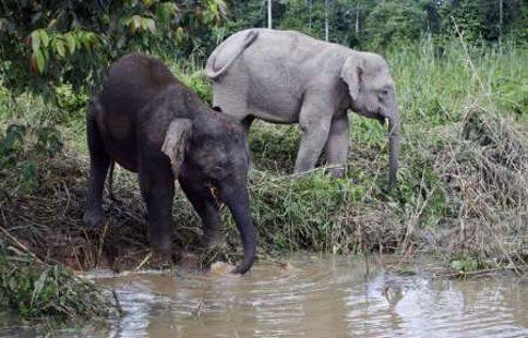 Out to get poachers: Sabah wildlife, forests now protected by special ranger unit