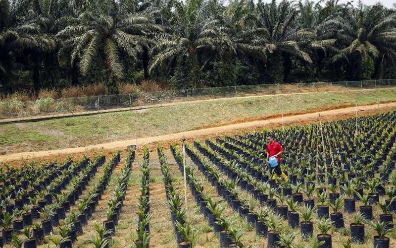 FGV moves into integrated farming