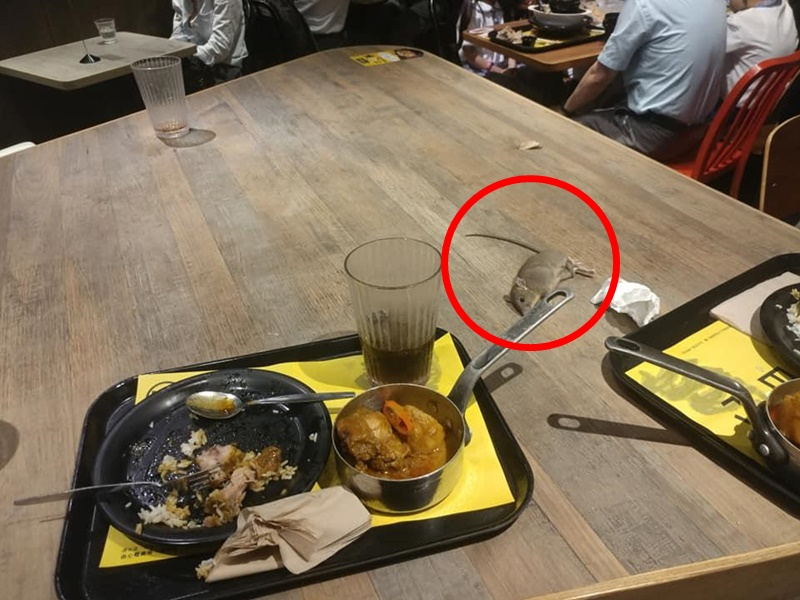 【维港会】将军澳快餐店惊现老鼠 从天而降掉落餐桌