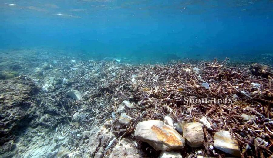 Damaged Kudat corals need 5 to 10 years to recover