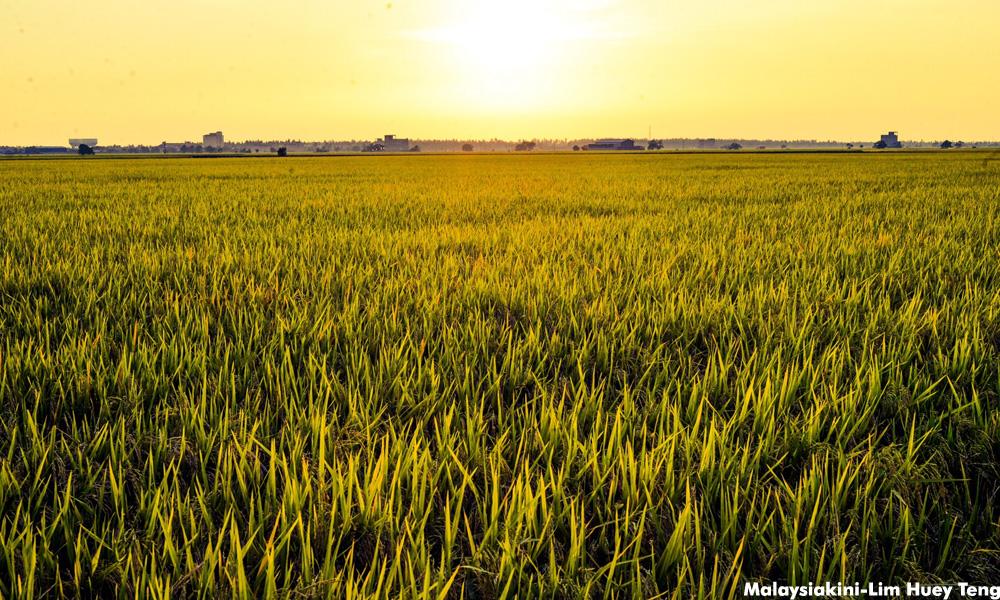 首相指小农地难获利,联土局呈土地合并建议