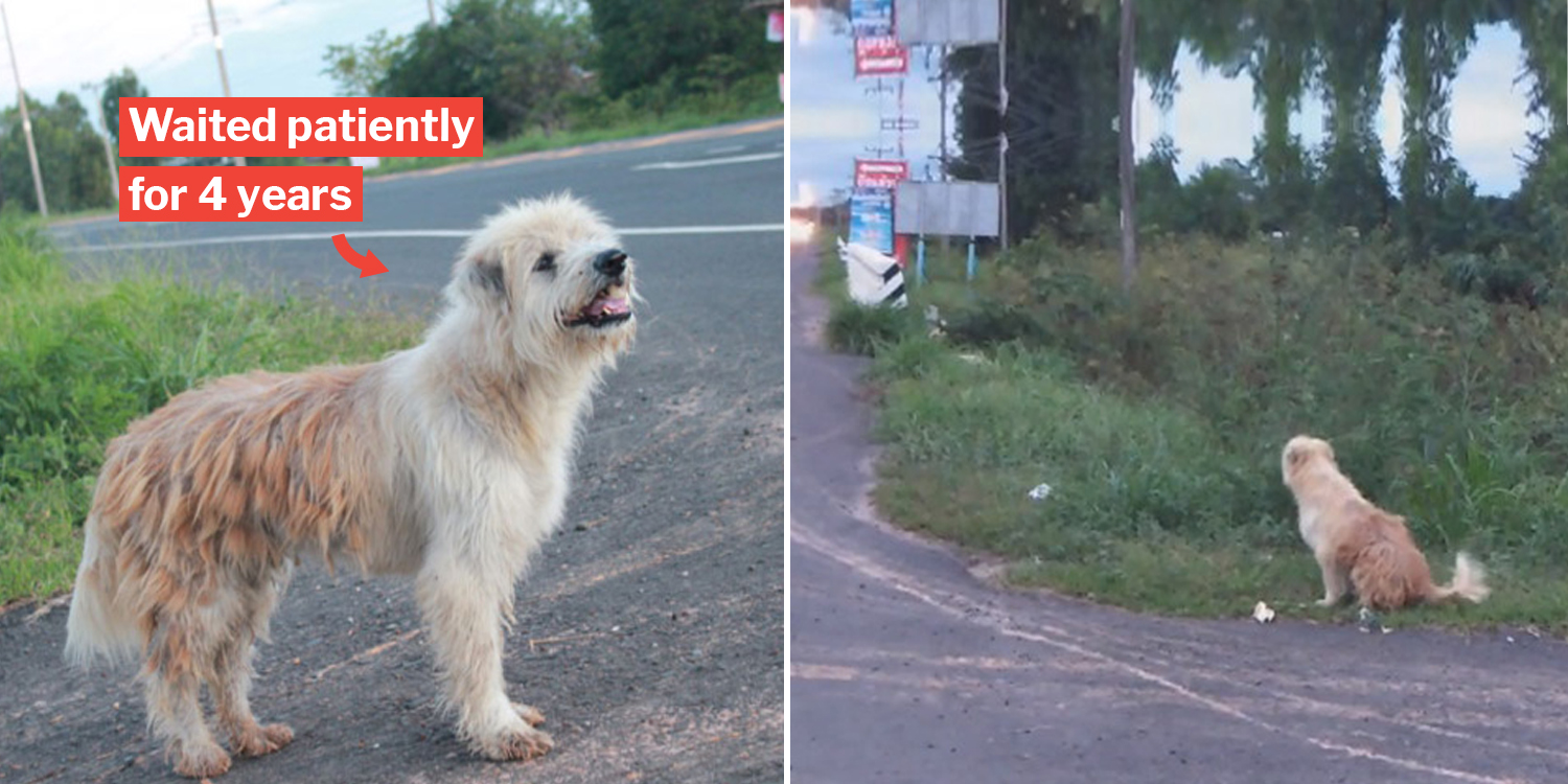 Loyal doggo reunites with family after waiting 4 years by a roadside in Thailand