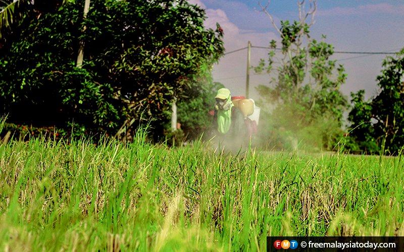 Small padi farms to become estates in Kedah, Kelantan