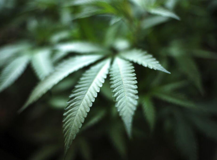 今年上半年呈报吸毒人数下降 吸食大麻人数按年增35%