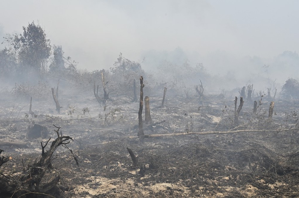 Kok: Malaysian companies won't be protected if Indonesian forest fire claims are true