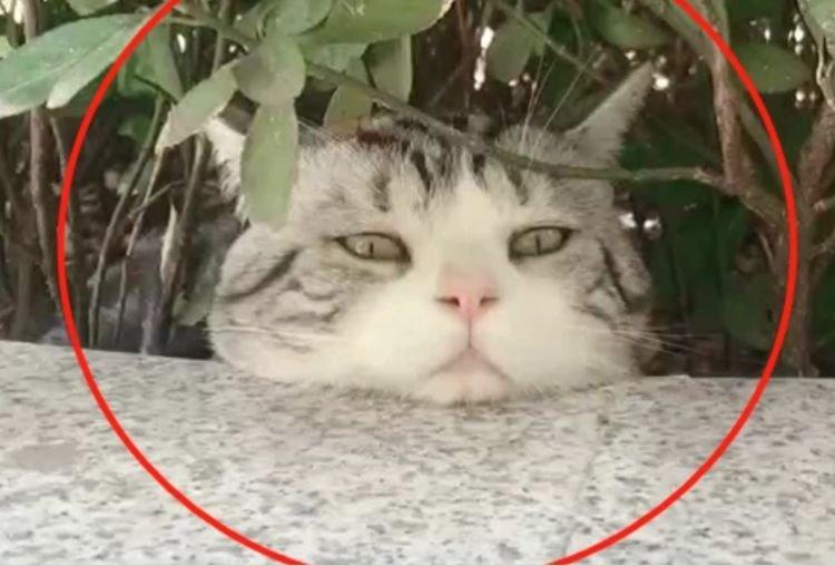 """猫咪""""吃醋""""躲了起来,主人喂东西也不理,主人笑喷"""