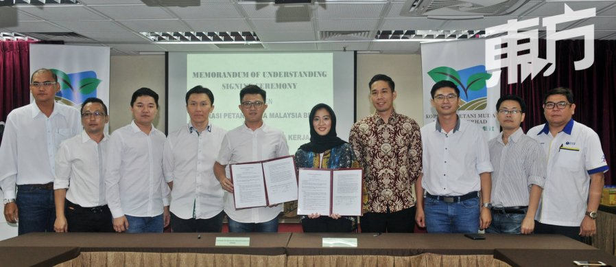青年农民合作社 与印尼推合约种植