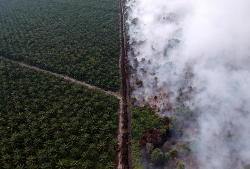 Palm oil, pineapples threaten SE Asia's indigenous lands