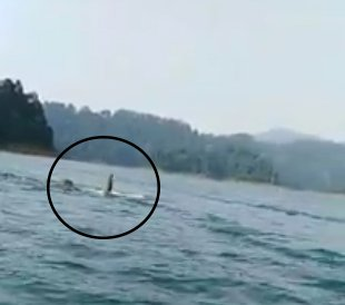Wild Elephant Spotted Enjoying A Dip At A Lake In Terengganu
