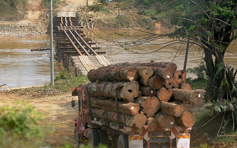 Indigenous folk better off with timber certification, says council