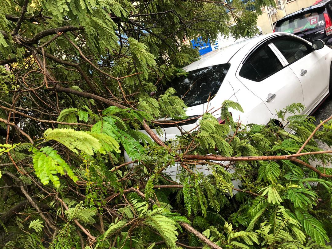狂风暴雨突袭 槟岛多地树倒