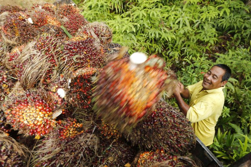 Malaysia says EU's palm oil ban is face of free trade duplicity