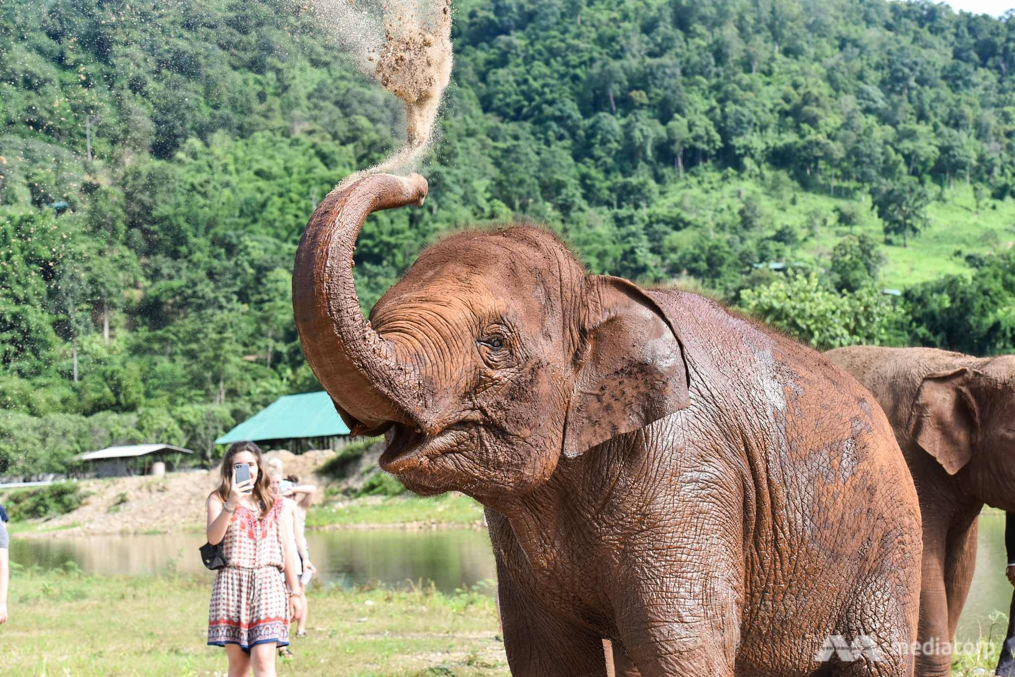Beasts of burden: A young elephant's journey to salvation