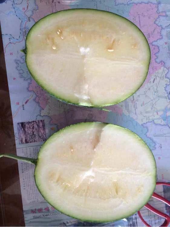 女子在阳台上种西瓜,就结了一个西瓜,摘下来切开后没人吃