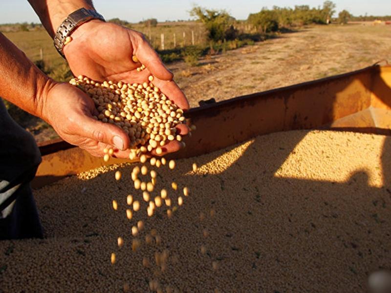 【中美贸易战】外交部:中国企业今年已採购2000万吨美国大豆
