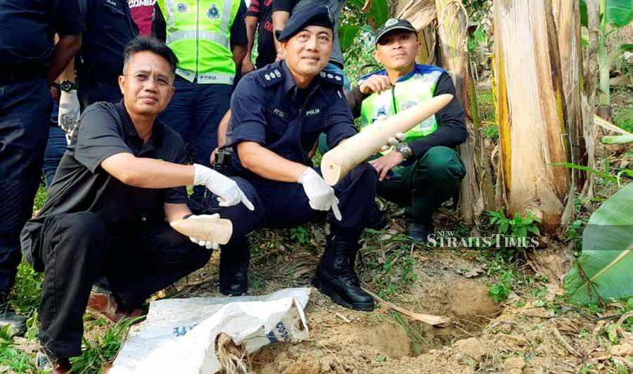 Cops recovers tusks of brutally killed pygmy elephant