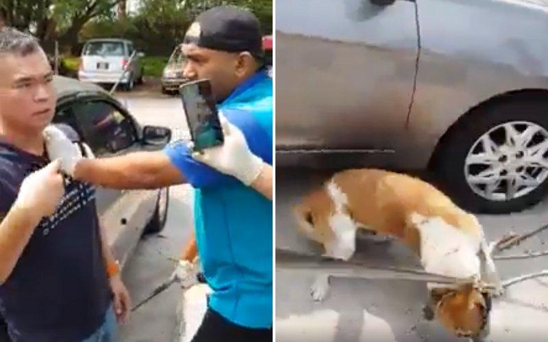 Cops probe viral video of MPSJ dog-catchers