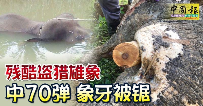 ◤70弹杀雄象◢ 嫌犯杀象后 象牙埋香蕉树下