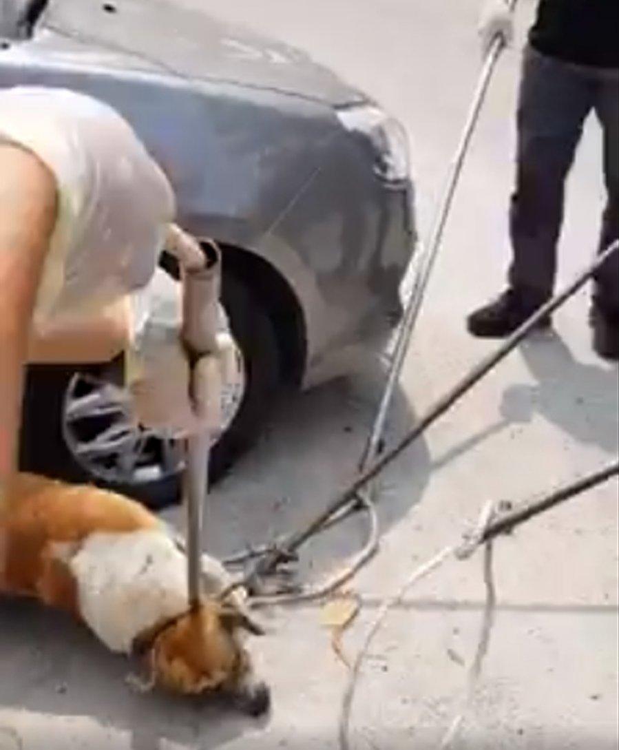 捕捉流浪狗 执法员与民爆发冲突