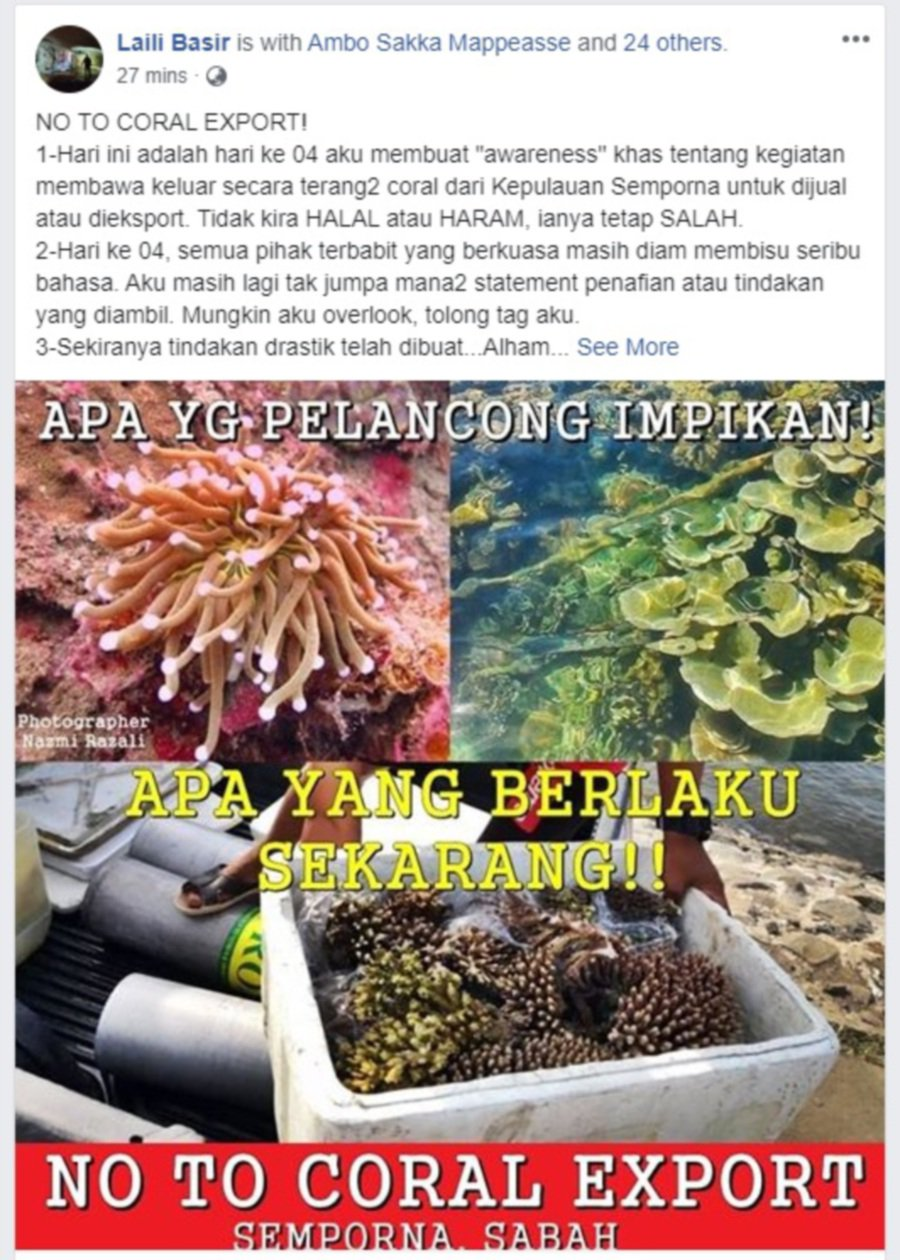 Authorities told to investigate coral theft in Semporna