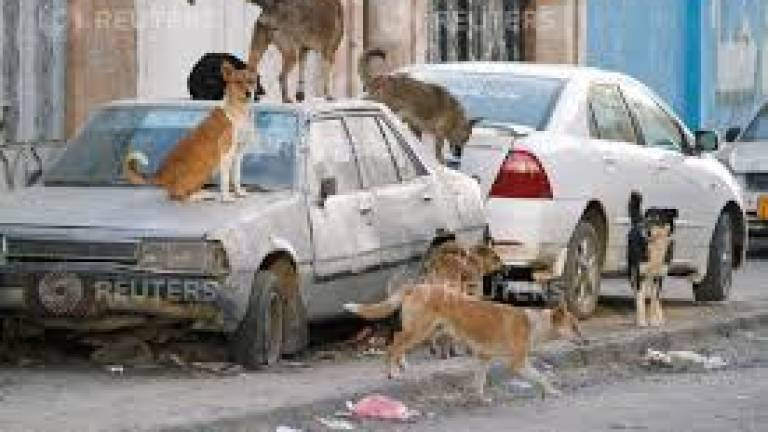 Mukah man, 64, latest to die from rabies