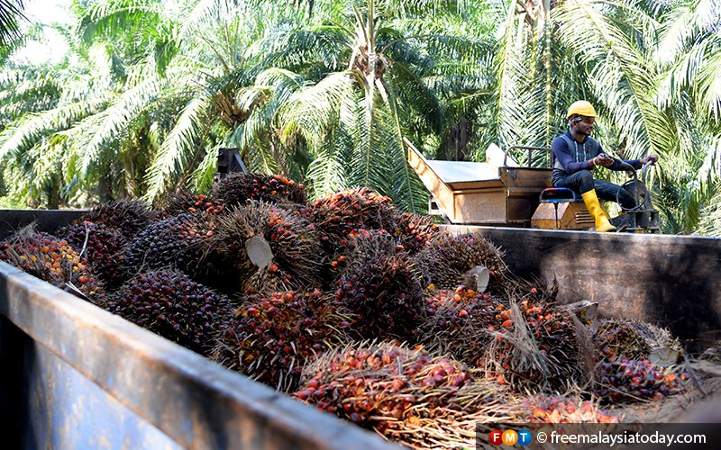 MPOA sees business as usual amid India palm oil curbs threat