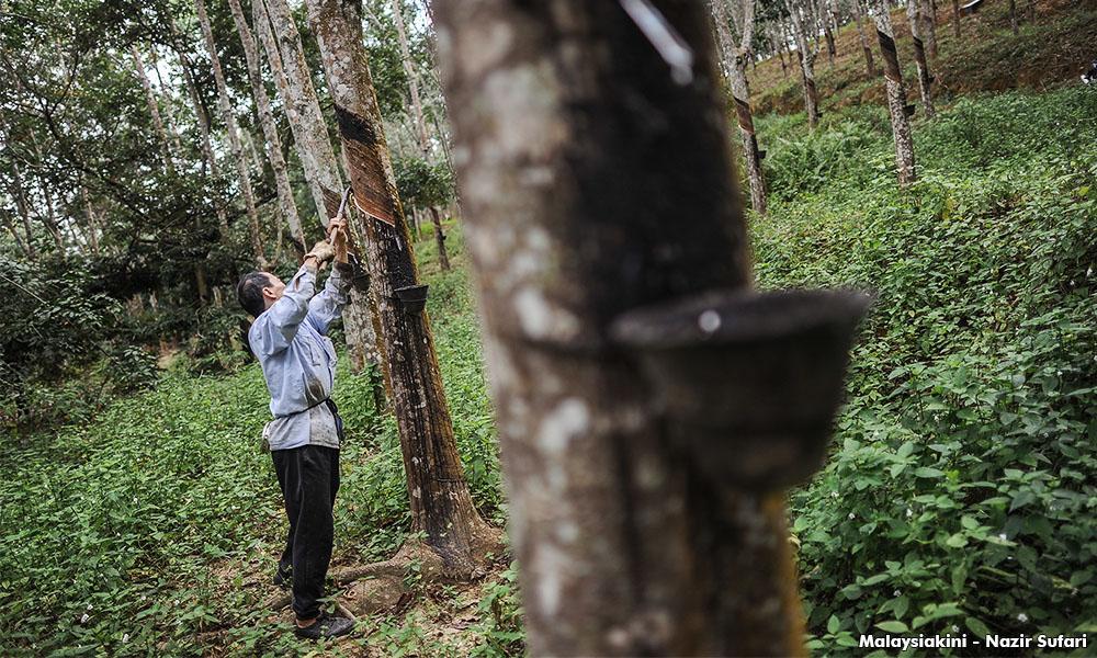 政府拨2亿雨季援助金,利惠橡胶小园主