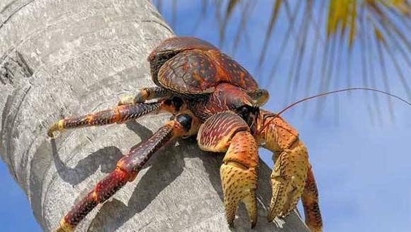 """它是""""最无辜""""海鲜,就因为出海吃个饭,却被吃货看上成为盘中餐"""