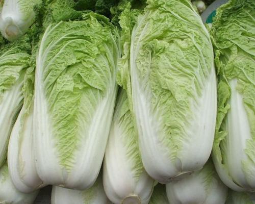 【健康Talk】大白菜家族养胃气利大小便 抗秋燥佳品