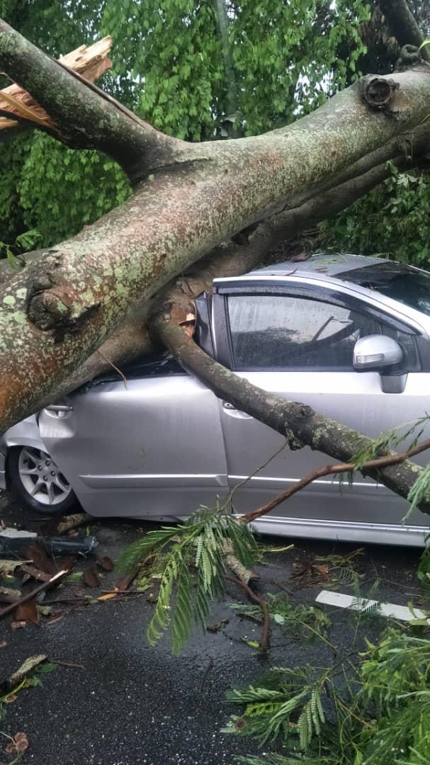 暴风雨袭隆雪森 多区树倒闪电水灾