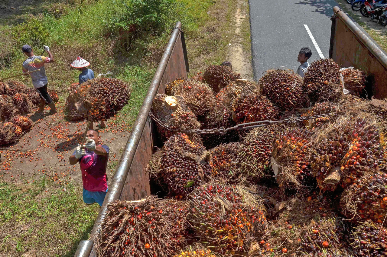 India expected to buy more Malaysian palm oil