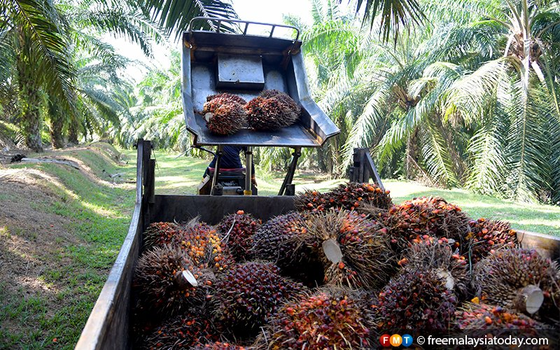 2 Japanese firms want to convert oil palm waste to energy