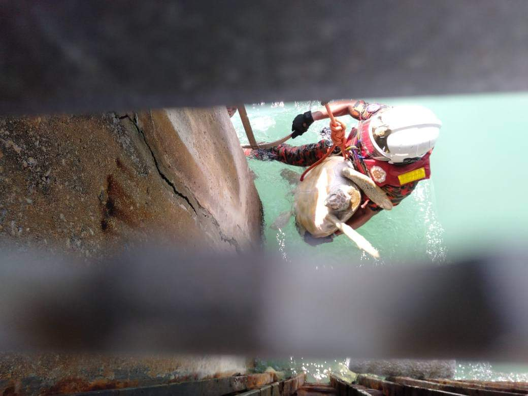 误闯发电站受困 绿海龟获救