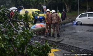 Falling tree kills woman at UM entrance