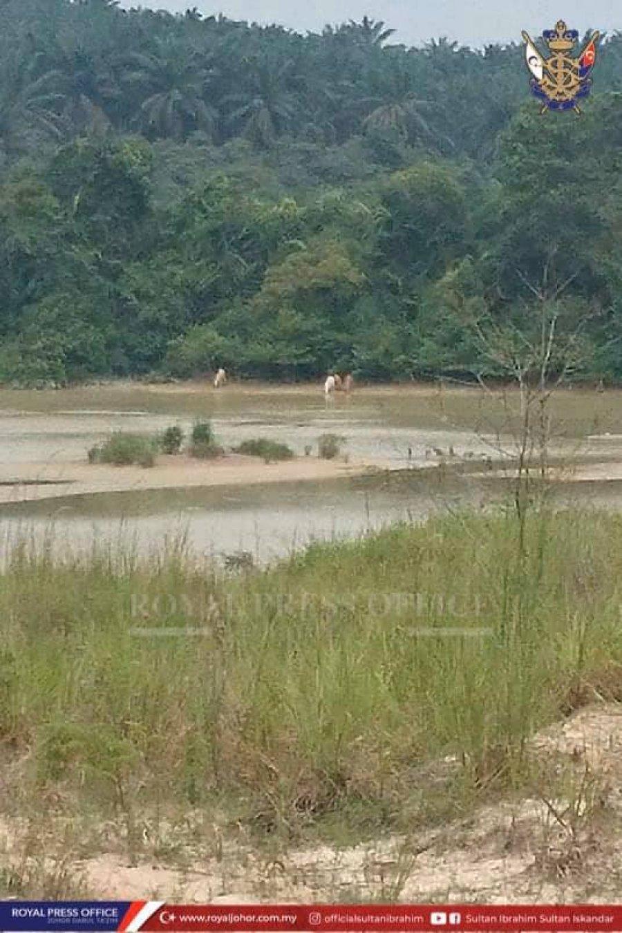 柔苏丹谕令加强执法 打击非法猎杀活动