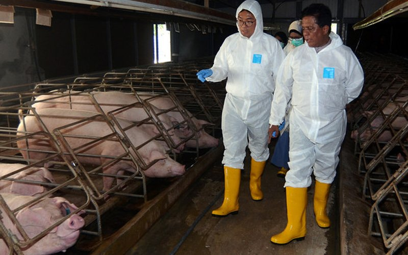 Keeping an eye on pork products after swine fever alert