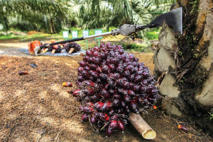Certified independent smallholders up 52%, says RSPO