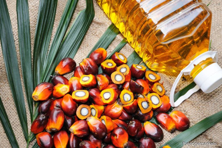 Palm oil climbs as tighter supply outweighs Indian demand fears