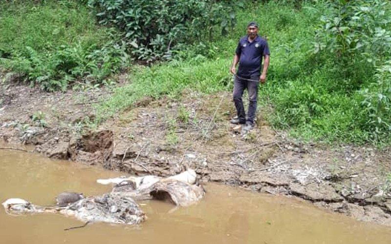 Sabah deputy CM vows to save pygmy elephants from extinction
