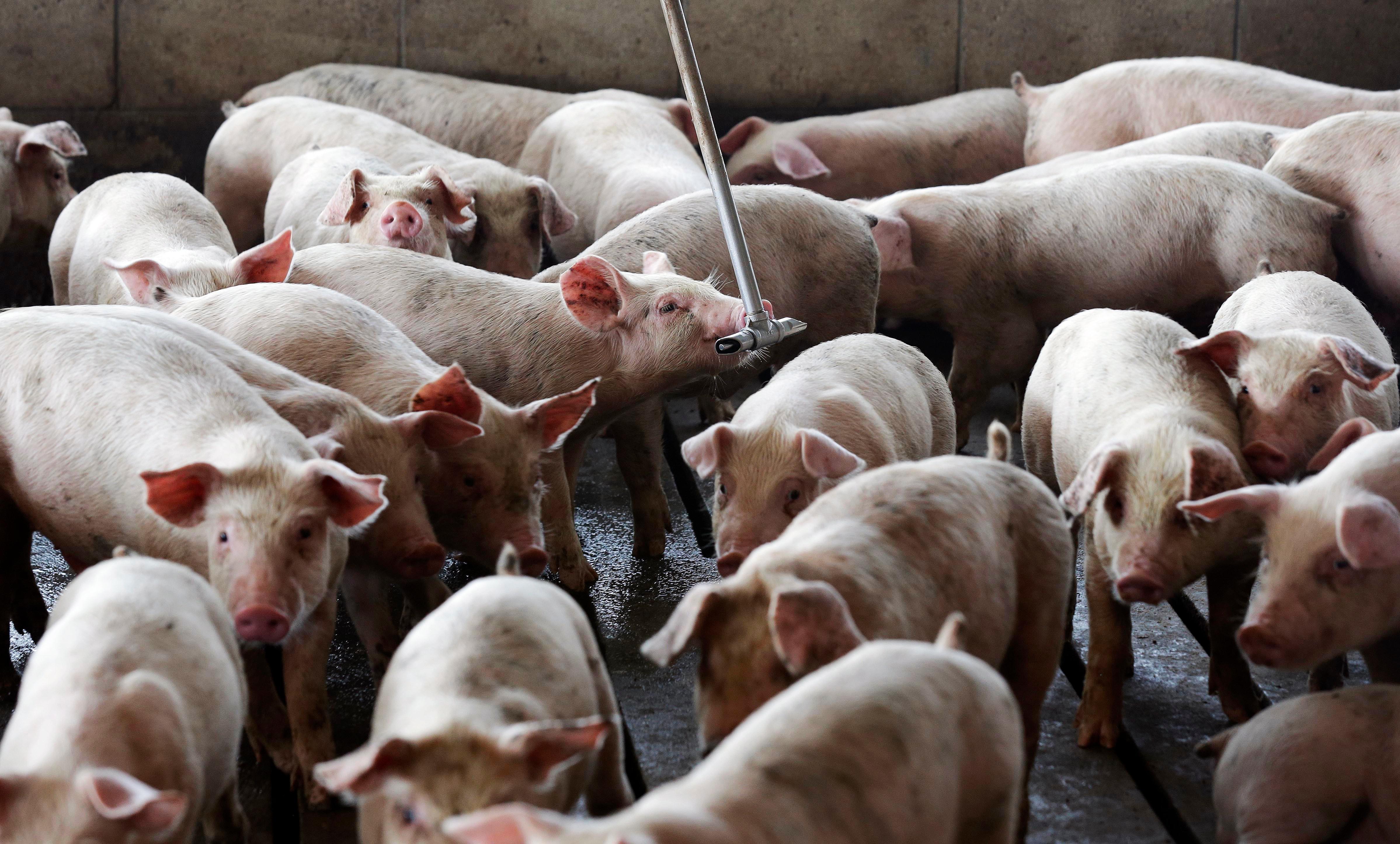 指加拿大「有错就改」 中国证实将恢復进口猪牛肉