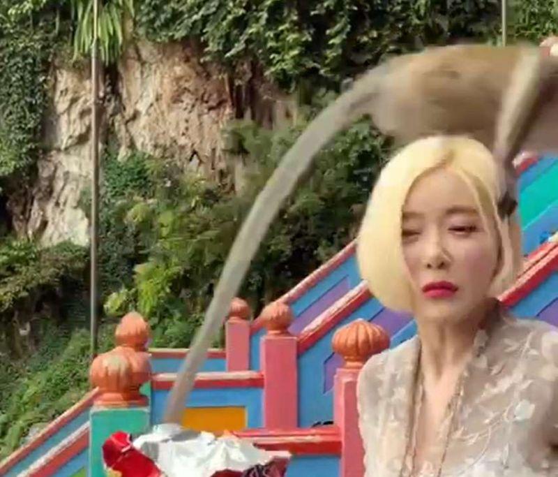 Batu Caves' cheeky monkey teases South Korean DJ Soda, sets internet abuzz (VIDEO)