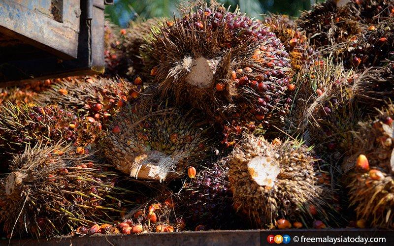 Palm oil 'boycott' by India likely speculation, Dewan Rakyat told