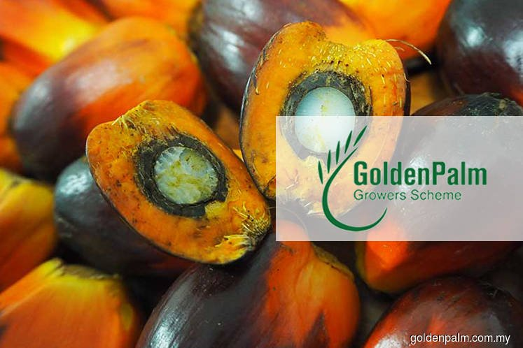 High Court orders Golden Palm Growers' investment scheme to be wound up