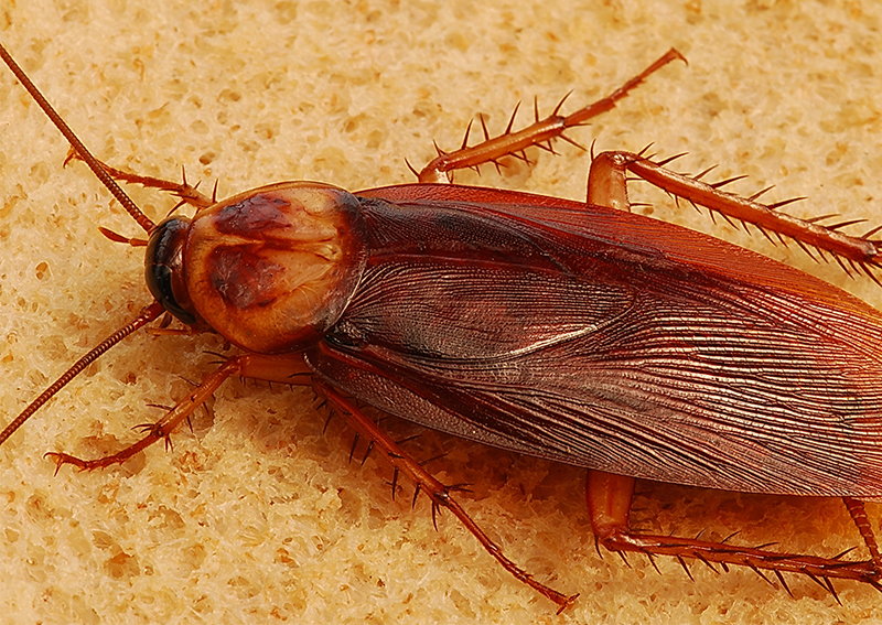 Chinese man complains of earache, finds a family of cockroaches living inside his ear