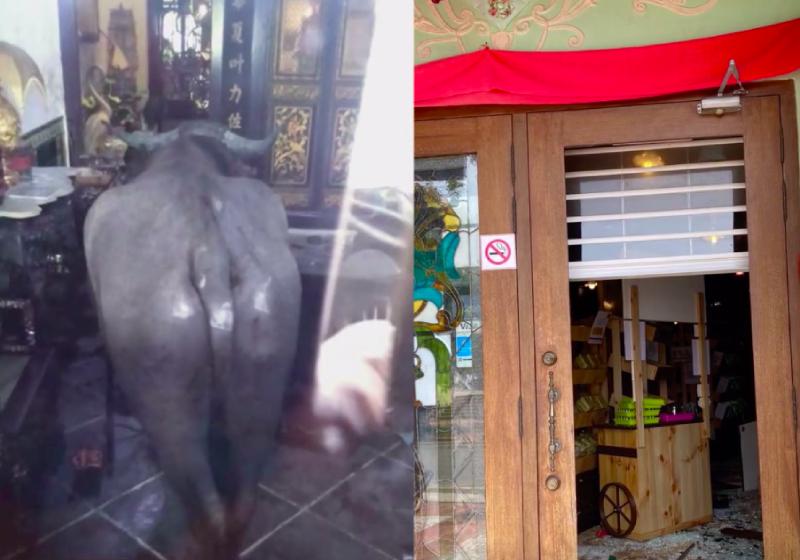 Runaway 700kg buffalo killed after it trespasses into Melaka hotel