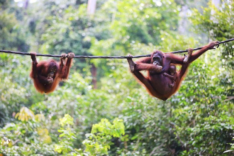 WWF Malaysia: Sabah still global leader in conservation despite recent elephant killings