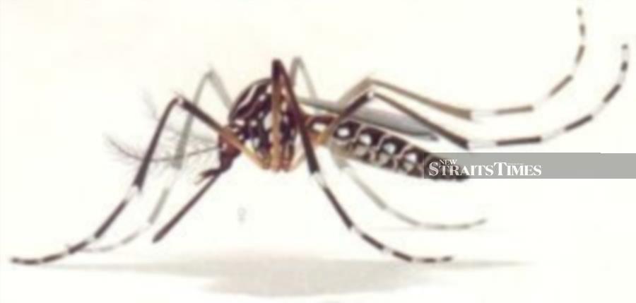 Sabah dengue cases soar by 61pct