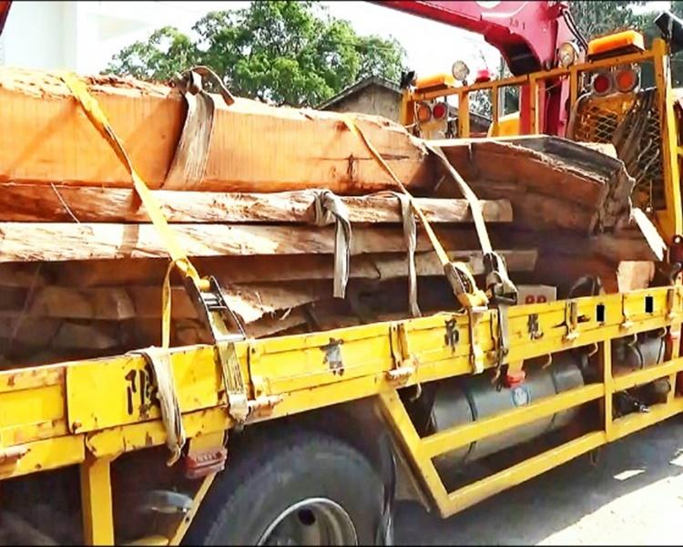 台破「山老鼠」盗木集团 检5.59吨珍贵林木拘6人